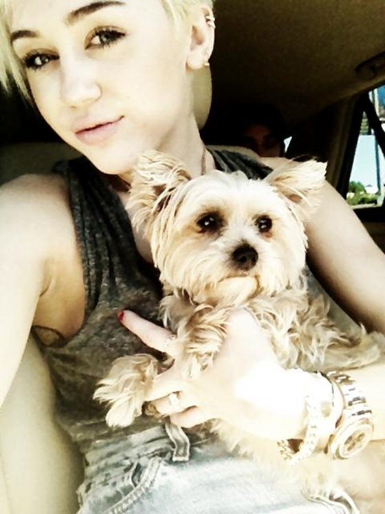Miley Cyrus Heartbroken Over Dog's Death - Help To Mourn A Pet