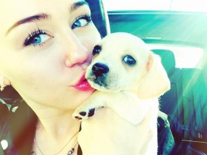 Miley Cyrus Adopts Rescue Dog Chihuahua Mix After Tragic Death Of Other Dog