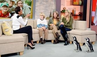 Bindi Irwin Has PETA Furious for SeaWorld Partnership